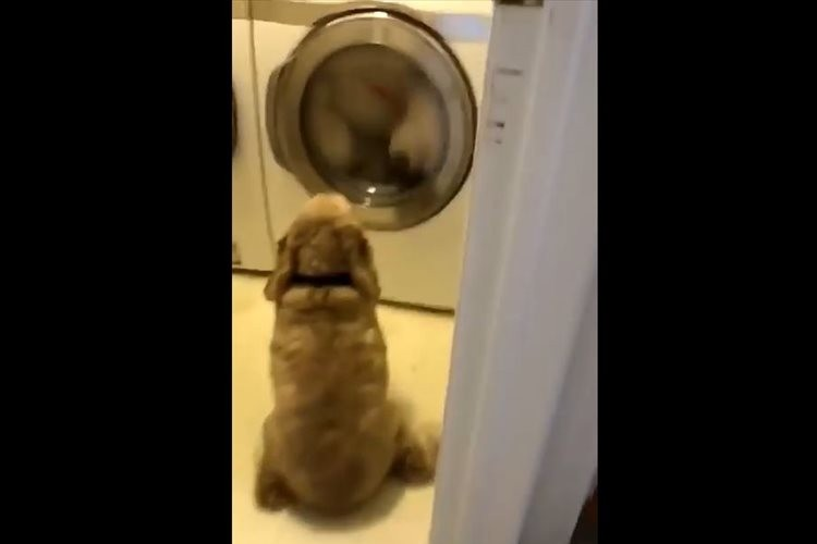 洗濯機の前に居座り微動だにしないワンコ…目線の先にあったものとは!?