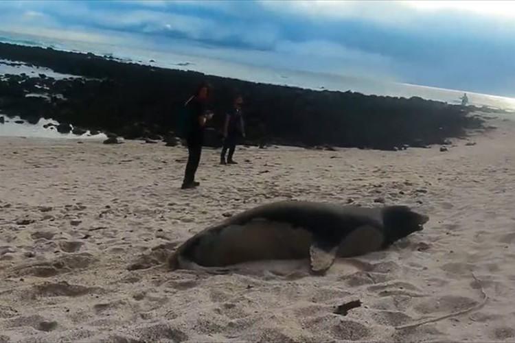 砂浜の上の方から、ゴロンゴロンと転がりながら海へ戻っていくアシカが可愛らしい♪