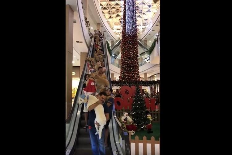 どういうこと!?エスカレーターがワンコだらけ…ブラジルのショッピングモールの異様な光景が話題に!