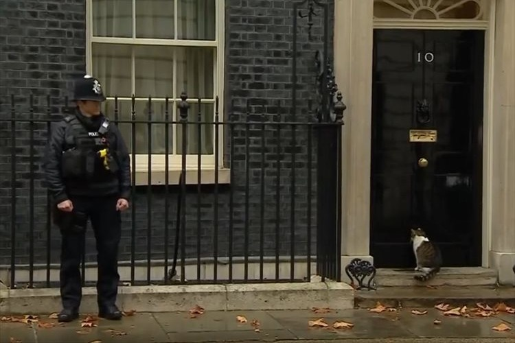 「扉を開けてほしいニャン」イギリスの首相官邸に住むニャンコと警察官の空気感が微笑ましい♪