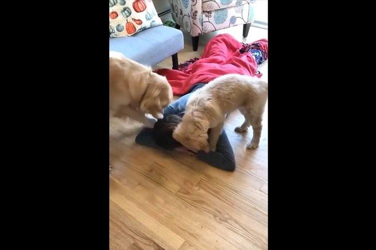 """「これで遊ぶんだワン!」2匹のワンコがオモチャ代わりに使おうとした""""あるもの""""とは…"""