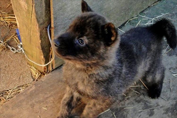 イギリスが子犬・子猫のペットショップでの販売を禁止へ…「日本でも法整備を」「日本も追随してほしい」