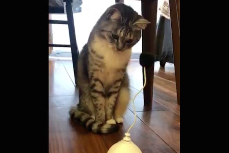 「別にこんなんではしゃがねぇし!」喜ぶかと思って買った新しいおもちゃに無反応な猫ちゃん