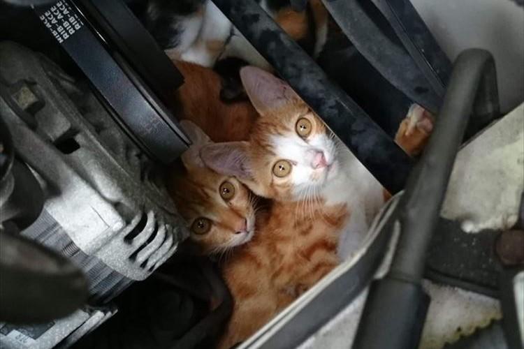 猫バンバンだけでは不十分!ボンネットを開けて確認しないと100%猫の命を防ぐことはできない