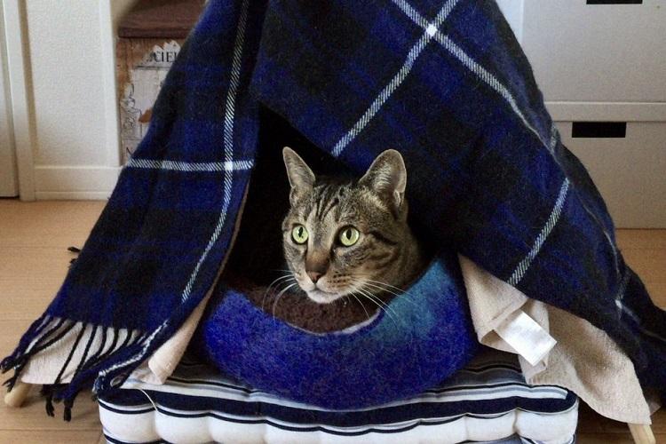 猫ちゃんぬくぬく、見た目もかわいい「猫テント」の作り方