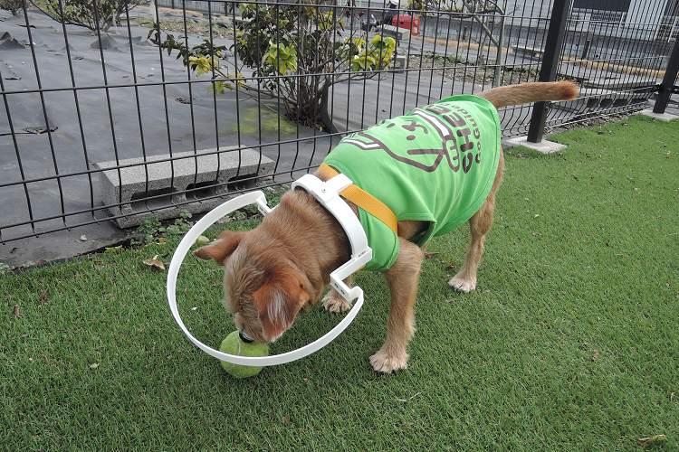 【朗報】視力を失ったワンコを衝突から守る装着具「ドッグバンパー・イージー」が発売