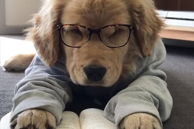 本を読みながらウトウト…眠りについてしまったワンコが可愛すぎる♪