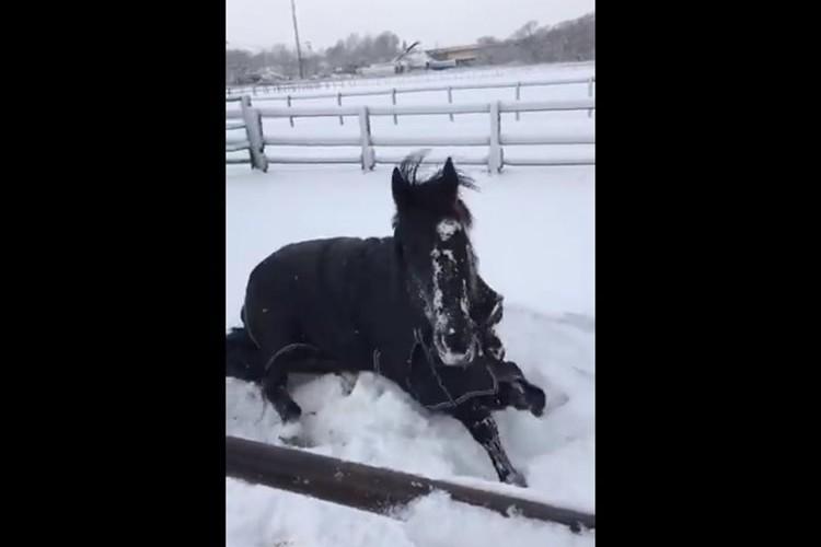 雪でテンションが上がったお馬さん、友達の馬が盛大にすっ転んだのを見て「え?あいつ…うそやん…」