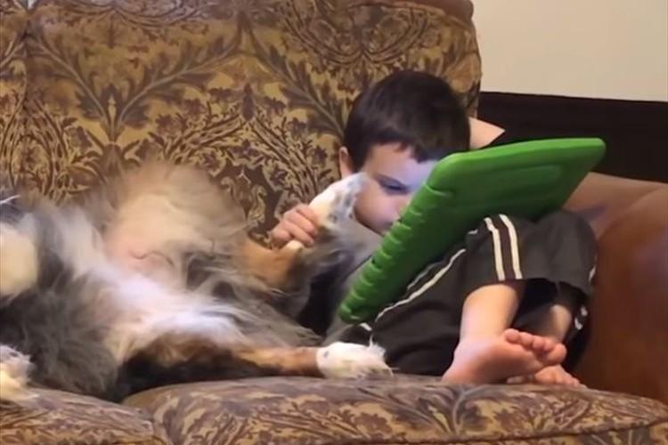 ワンコの肉球をタッチペンの代わりに使う子供…その時のワンコの表情はこうなった