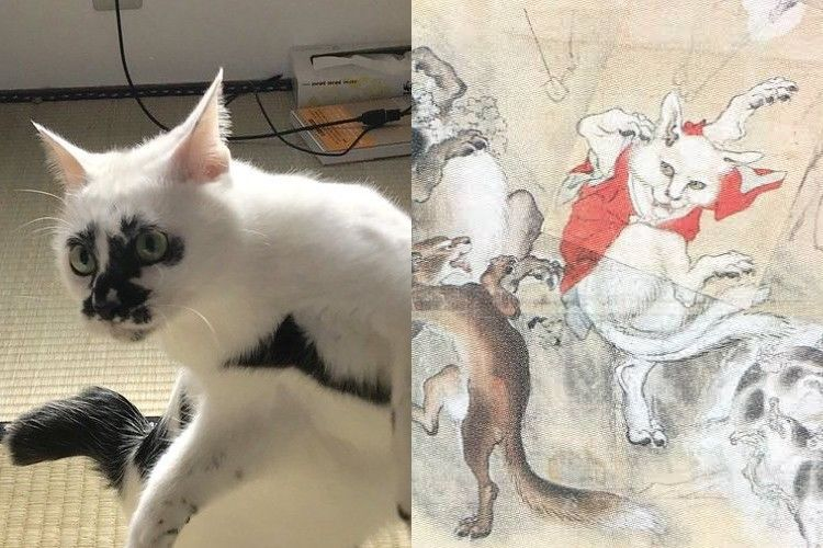 妖怪猫又が現実に!?河鍋暁斎の作品みたいなポーズをする猫ちゃんが話題