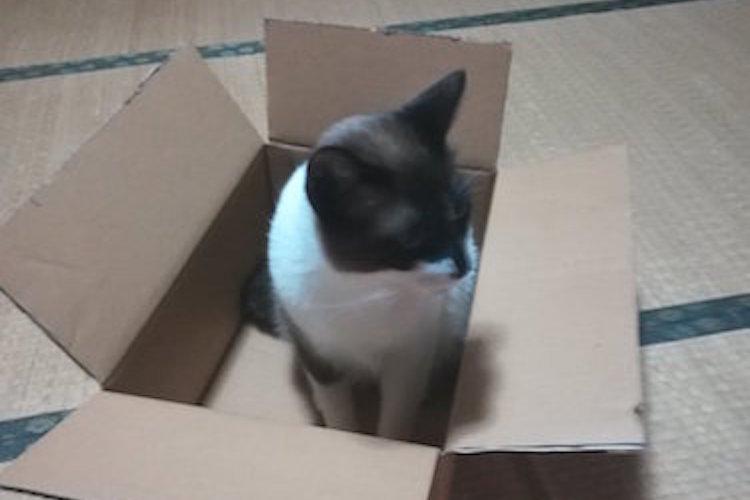 「猫ちゃんお利口に留守番お願いね」しかし帰宅したら段ボールが無残な姿に...!