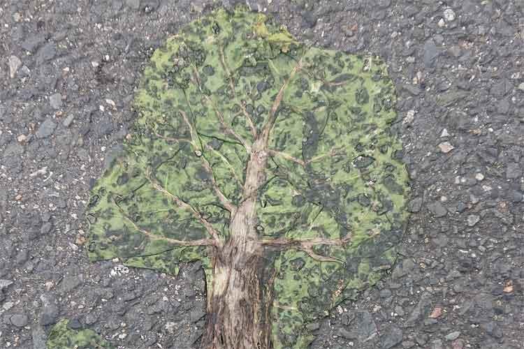 【神秘】道路でペシャンコになった野菜の切れ端が、なんと世界樹に!
