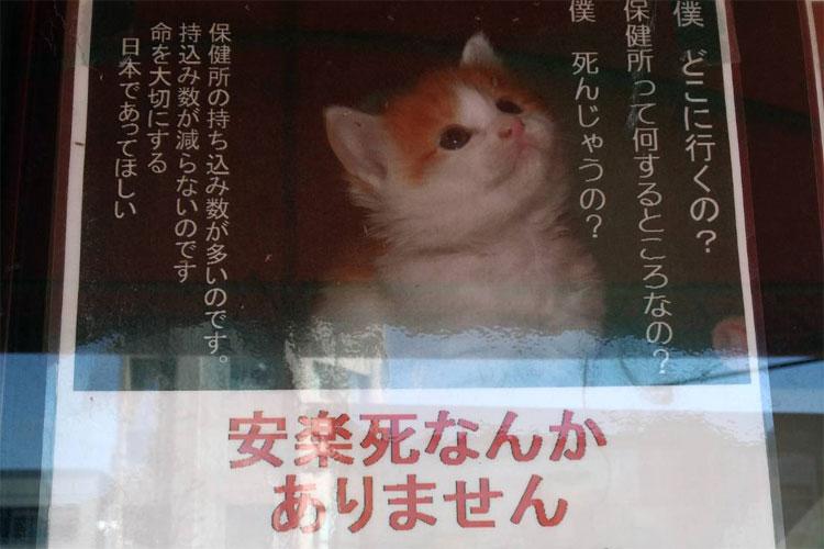 それでもあなたは保健所に連れて行きますか?動物の命の大切さを訴えるポスターが話題に