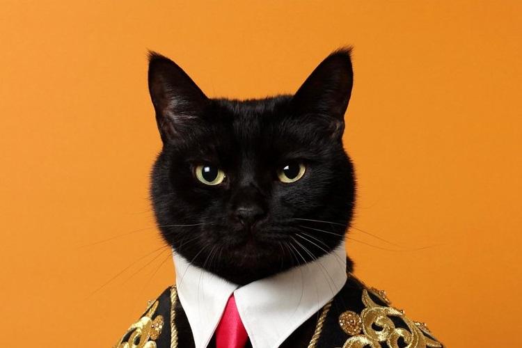 イケメン猫現る!闘牛士コスプレをした猫さんが凛々しすぎた