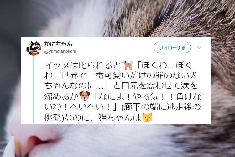 ああ、可愛い…『叱られた時の猫ちゃんの反応』が猫ちゃん然としていてとても良い