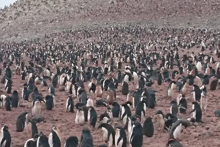ペンギンに会えるといいなぁ~と期待して南極に行ったら… とんでもない数のペンギンに遭遇