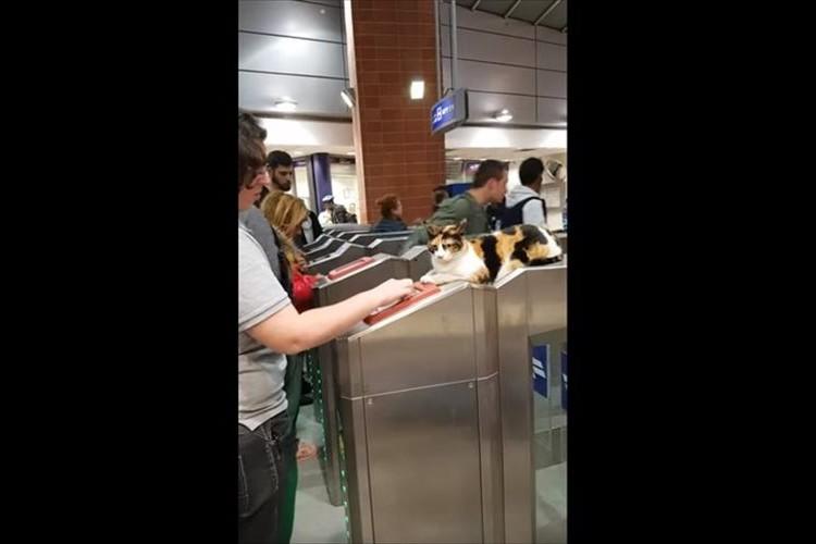 「まるで駅員のようだね」駅の改札に鎮座して人々を迎えるニャンコが可愛らしい♪