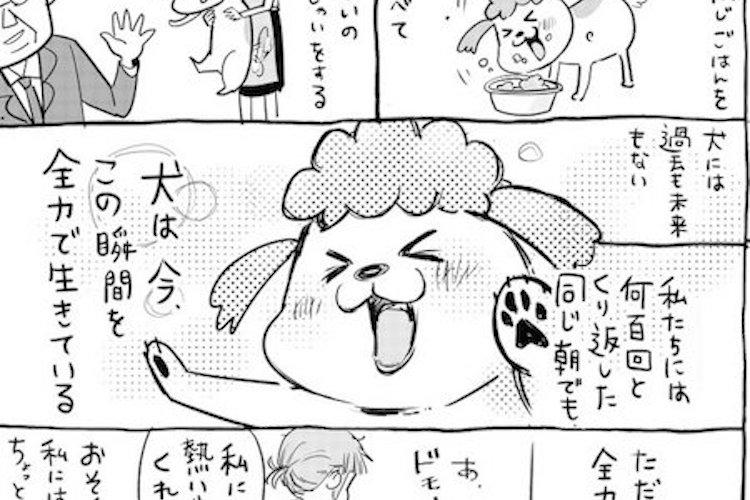 「犬と猫どっちも飼ってると早起きも寝坊もなんでも楽しい」を描いた漫画に共感の声