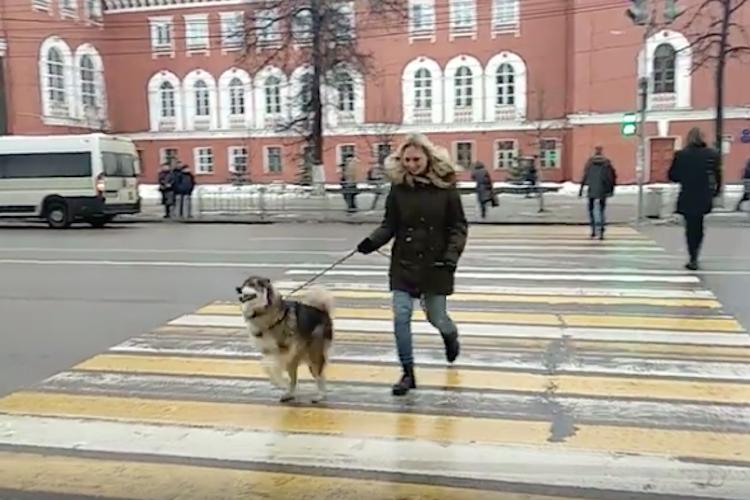 え?二足歩行!?信号の渡り方が独特なロシアのワンちゃん