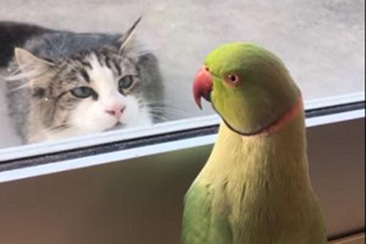 いないいないばあ~!近所の猫ちゃんと遊ぶオウム、仲良しな姿に思わずほっこり