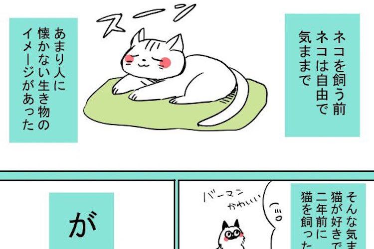 あれ?思ってたのと違っ…猫に対するイメージとは真逆だった愛猫の行動に思わず胸キュン