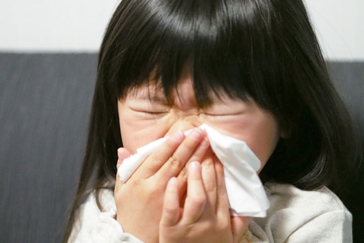 北海道には花粉症の人がいないってウソ?本当?