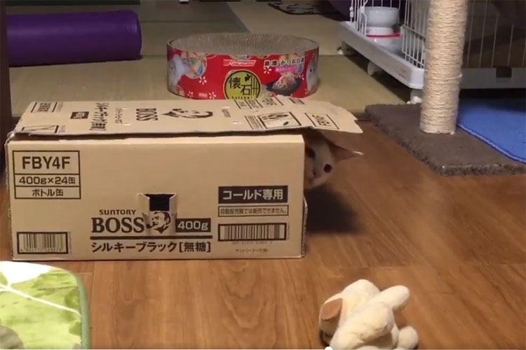 「ぬいぐるみ取りたい!…でも今入ってる箱から出たくない!」という猫の動作がユーモラス