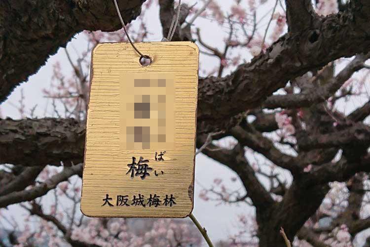 「すっぴんで慌てるギャルみたいな梅の木」と例えられてしまった梅とは一体!?