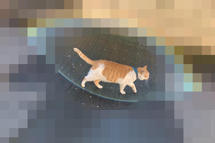 """トコトコ…と歩いているだけなのに虹が!?""""神々しいまでのオーラ""""を放った猫が注目の的"""