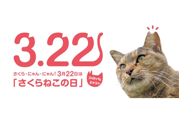 花びら型の耳は不妊手術済の目印!猫の殺処分ゼロを目指し、3月22日を「さくらねこの日」に制定