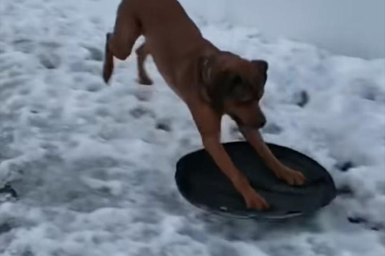 """イイイィーヤッホーーイッ!雪の上を""""何か""""を使って滑走!ワンコはやっぱり賢かった"""