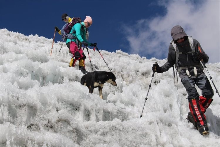 登山隊の後に付いてきた野良犬が、そのままヒマラヤ登頂に成功してしまう