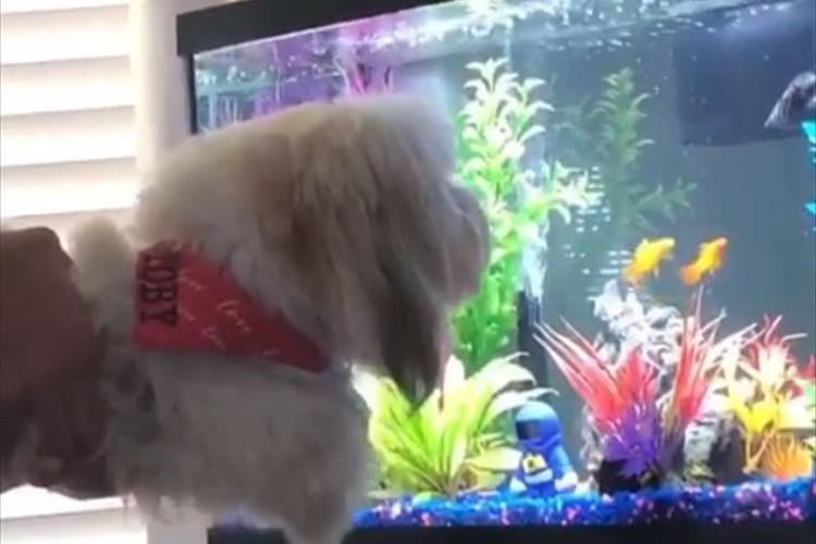 """これは""""エア犬かき""""!?愛犬に熱帯魚を見せた時のリアクションが可愛らしい♪"""