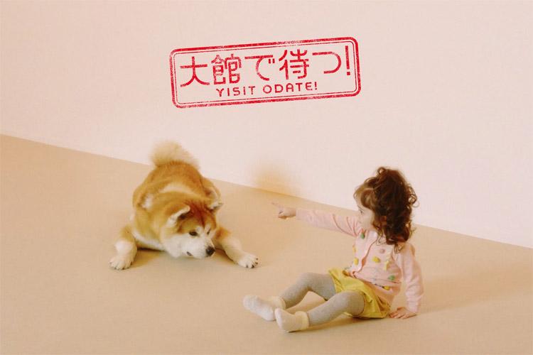 比内地鶏、きりたんぽ…なんと秋田犬が秋田県大館市の名物を体現!観光施設「秋田犬の里」の動画が可愛い♪