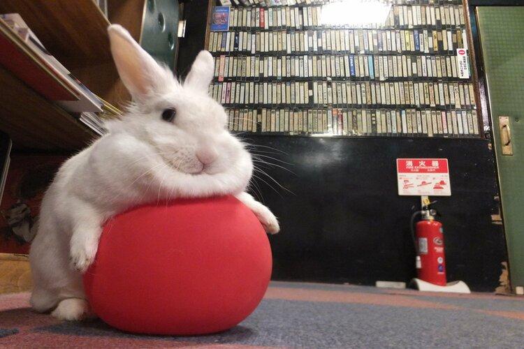 秋田県の映画館「御成座(オナリ座)」の看板うさぎ、てっぴーちゃんがモフモフで超可愛い