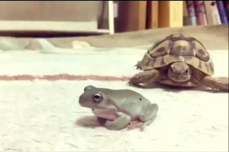 """種を越えた友情!?カメとカエルの""""交渉""""に訪れた結末にみんなほっこり"""