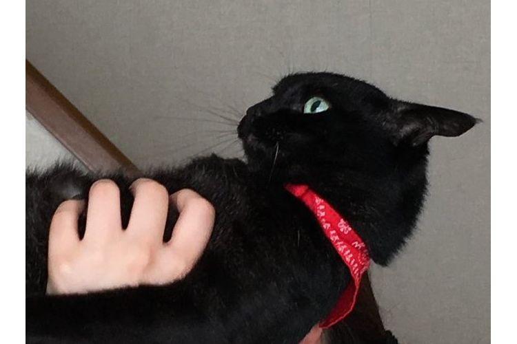 背筋ピーーーン!「猫かどうかも怪しすぎる」姿勢よすぎなニャンコに騒然