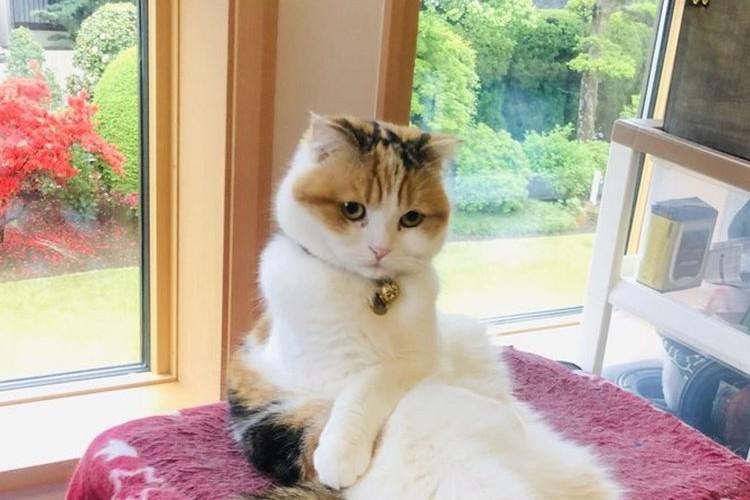 「起きてリビングきたら…...」猫ちゃんが貫禄満点のセクシー姿で座っていて思わずビックリ!