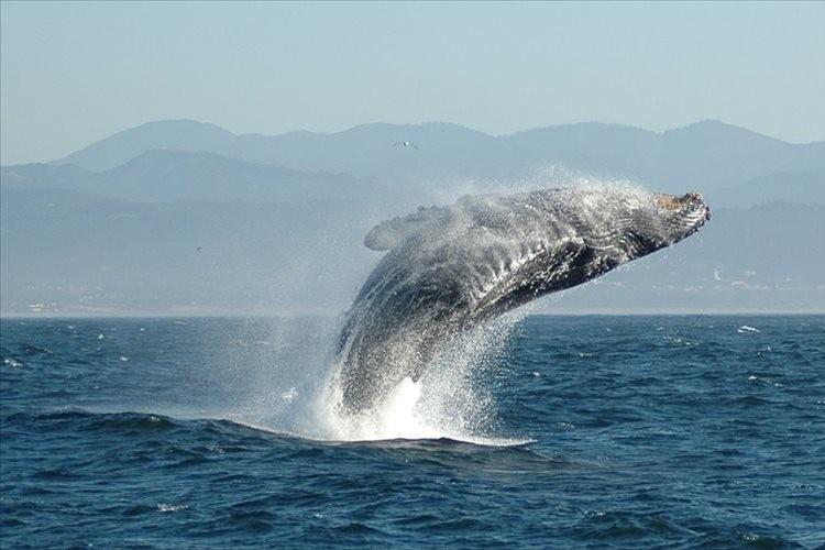 """""""クジラの祖先が4本足だったことを示す証拠""""が南米で初めて確認される…国際研究チームが発表"""