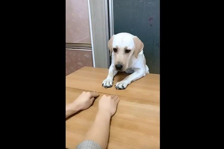 左!右!左!右!飼い主さんの動きをパーフェクトに真似するワンコが可愛らしい♪