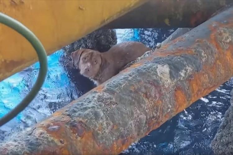 沖合までどうしてたどり着いたのか?タイの沖 約220キロの石油掘削施設で必死に泳ぐワンコを発見し救助!