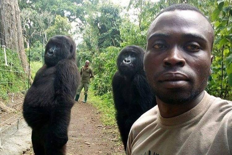 ゴリラ達を密猟者から守るレンジャー隊員の自撮り写真に反響「まるで皆が家族のようだね」