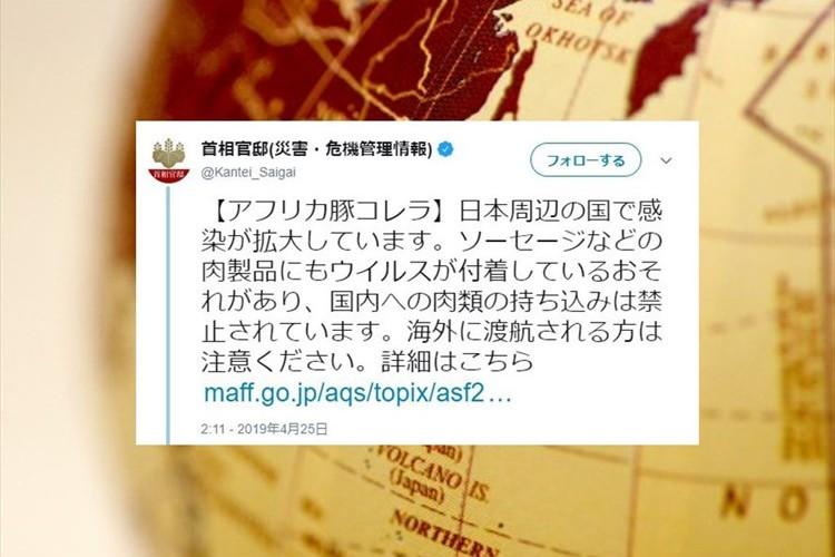 首相官邸の公式アカウントが注意喚起!日本周辺の国でアフリカ豚コレラの感染が拡大