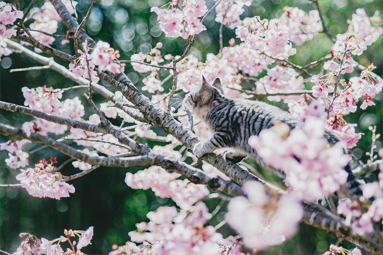庭で桜の写真を撮影していたら思わぬ乱入者が!「可愛い乱入」「乱入した上で絵になる」