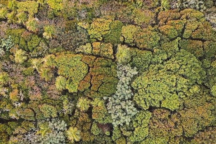 いつまでも見ていられるゆらゆら感…上空から撮影された森の映像がなんとも不思議で幻想的!