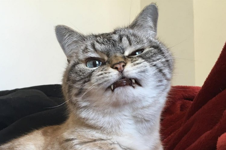 え、怒ってる...?怒り顔だけどめっちゃ可愛いニャンコのロキちゃんがSNSで大人気!