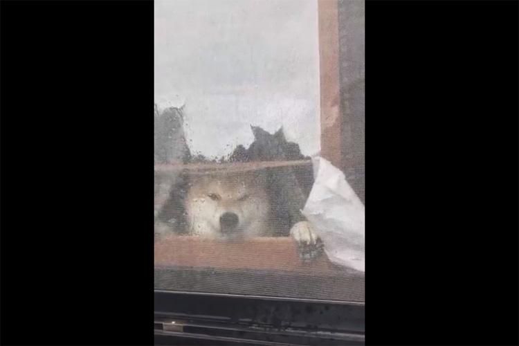 """""""窓の外から水をかける飼い主さん""""VS""""水を飲もうとするも飲めないワンちゃん""""の攻防がまるでコント!"""