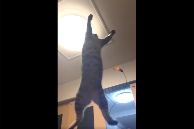 可愛い猫ちゃんが特大ジャ~ンプ!!躍動感あふれる瞬間をとらえたスローモーション動画に反響