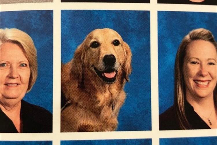 生徒達の心に寄りそっていた介助犬に対する学校の粋な計らいに反響「なんて素敵なアイディア!」