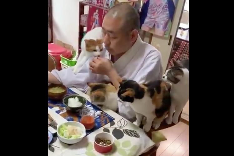 「にゃー、サンマ美味しそうだにゃー」猫ちゃんに囲まれた住職さんの朝食風景がめっちゃ可愛い